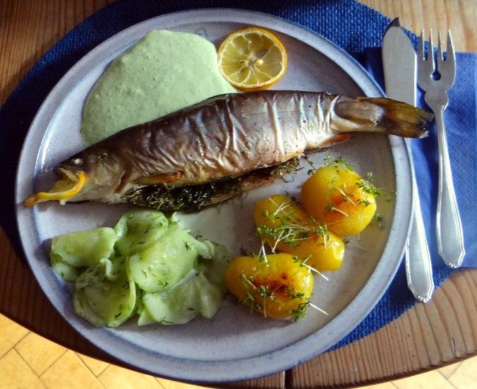 Saibling,Dillsoße,Kartoffeln,Gurkensalat (1)