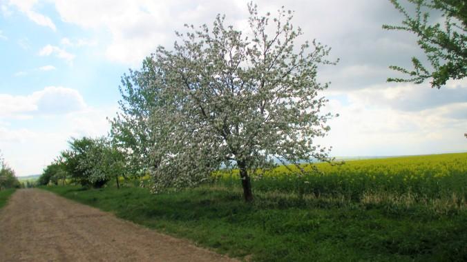 Nermsdorf (1)